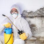 Mold-Remediation-Company-dallas