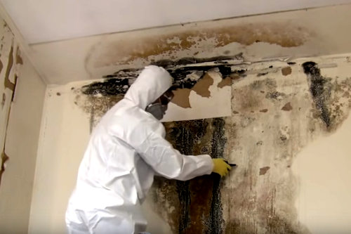 Mold Removal San Antonio - Why is it Important?
