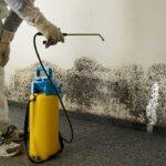 mold removal san antonio